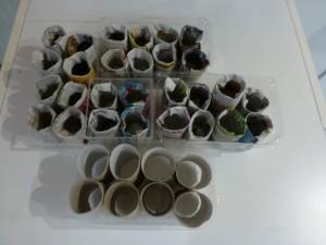 Anzuchttöpfe aus Zeitung und Klopapierrollen, stabil in alten Plastikschalen von z.b. Weintrauben