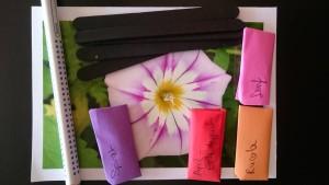 Unser Gewinn, Karte, Stift, Pflanzenstecker und tolle Samen