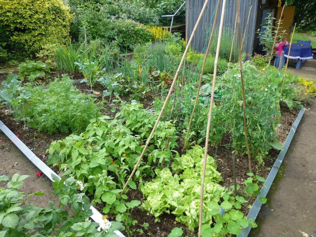 Das Gemüsebeet im Frühsommer