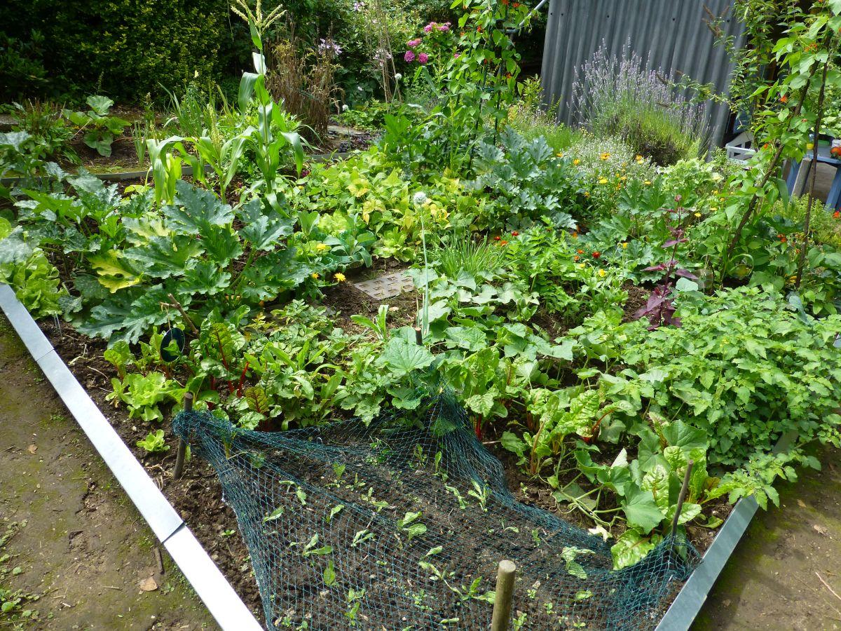 Gemüsepflanzen im Beet