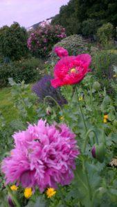 Die Blumen in unserem Garten