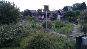 Unser erster Kleingarten